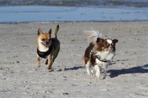Ostseeurlaub mit Hund - Wassergrundstück Piratennest Darß