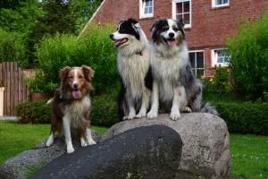 Ansicht Ferienwohnung Urlaub mit mehrere Hunden auf der Siriushof. Complett umzaüntes Grundstück