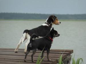 Ansicht Ferienwohnung Ostseeurlaub Piratennest Darß - Hundeparadies - Wassergrundstück