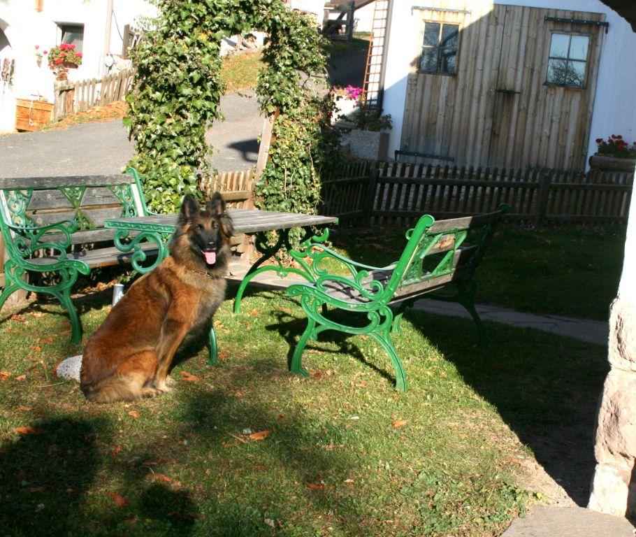 Urlaub Mit Hund Eingezäunter Garten: Bildergalerie Von Entzückendes Domizil Mit Eigenem