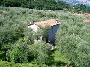 Ferienhaus LAURA in Malcesine in einem 2500 m² großen Olivenhain