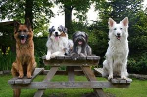 Ferienwohnung Sirius 3, urlaub mit Hund in schönes Ostfriesland