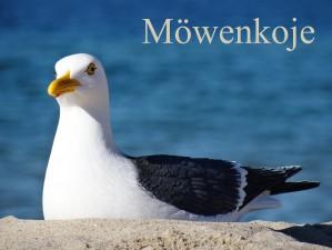 FeWo Möwenkoje Strandlage Cuxhaven Duhnen Hunde & Kinder willkommen